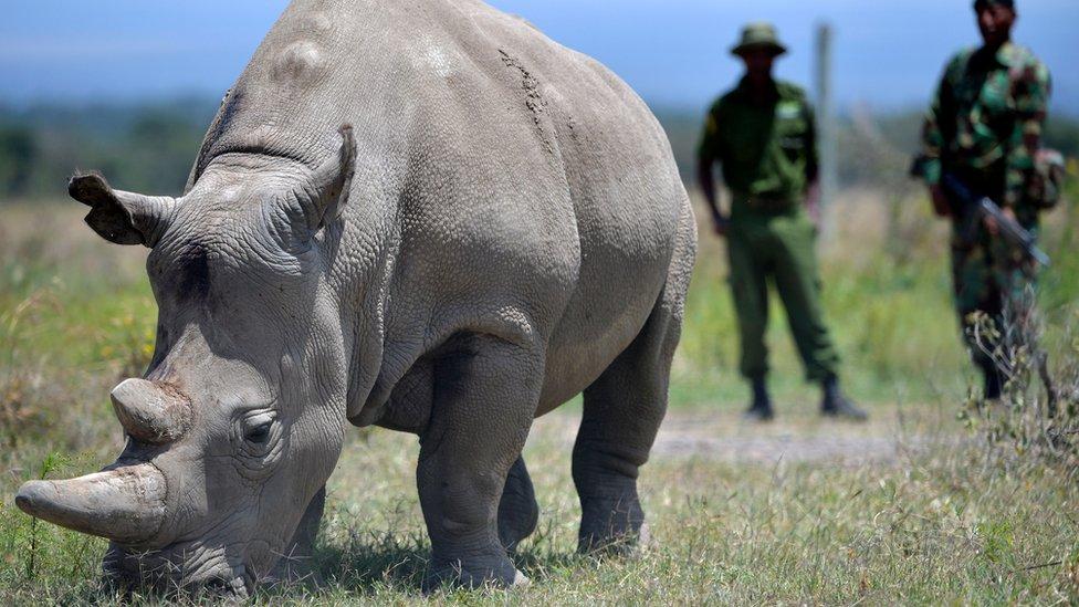 KWS: No rhino was poached in 2020   Taalamu News
